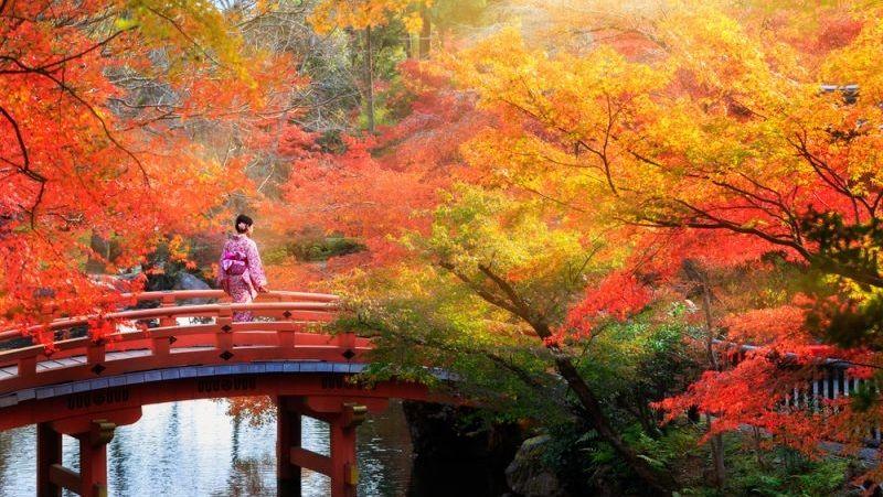 Hal Yang Wajib Dilakukan Saat Musim Gugur Di Jepang